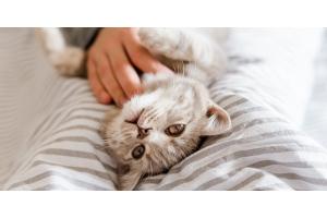 Allergie ai gatti: cause, sintomi e rimedi